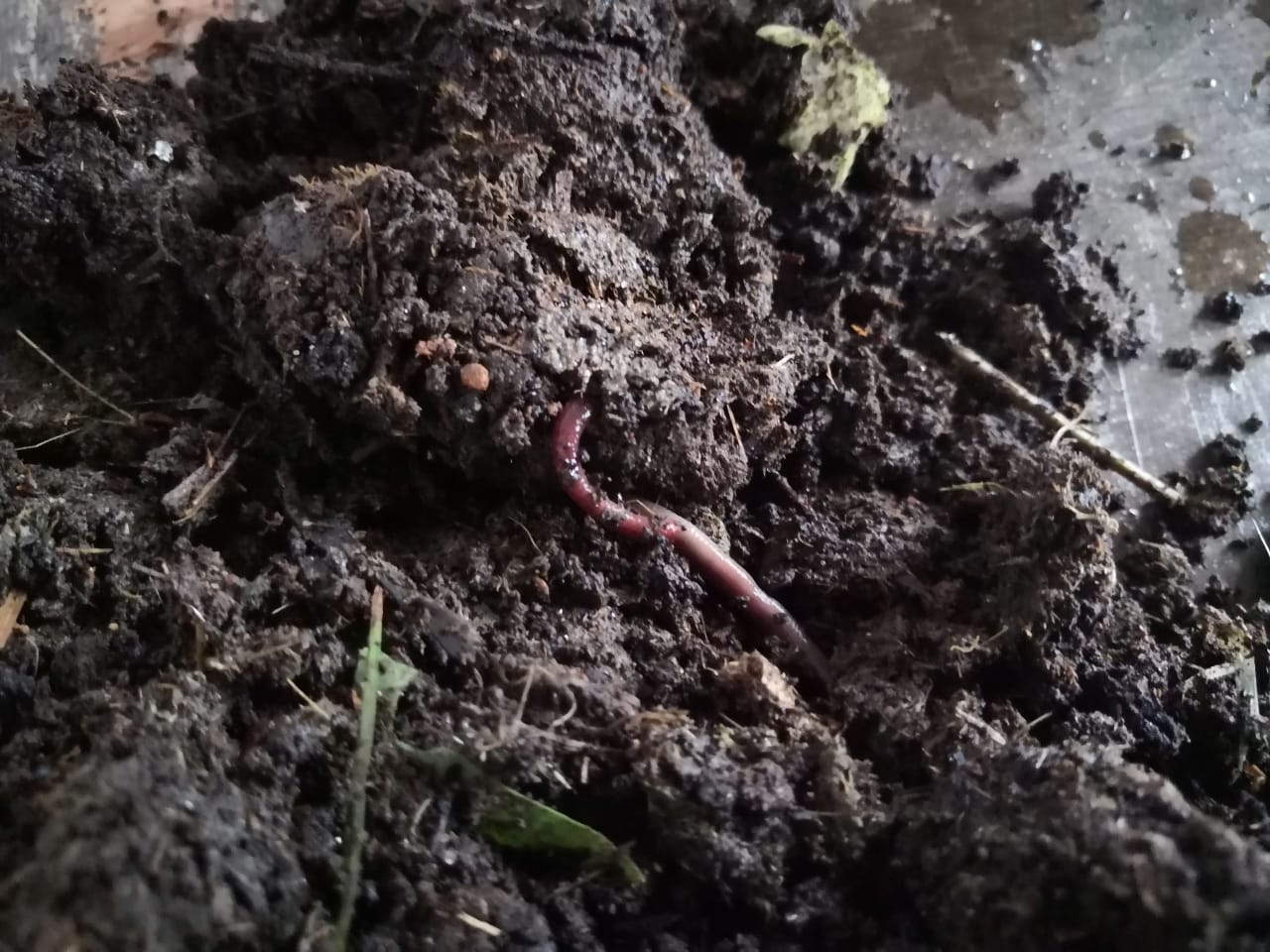 Vermiculture Waste Decomposition in Action at Sustainable Sikkim's Gangtok Office